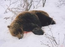 2011_bear_000