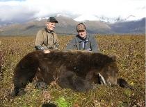 tonys-brown-bear