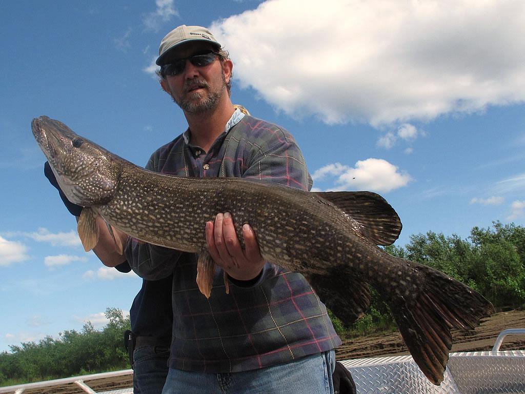 Alaska hunting and fishing guides pike safaris world for Fishing and hunting