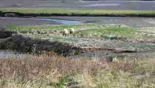 Video – 2013 Alaska Peninsula Brown Bear Hunt